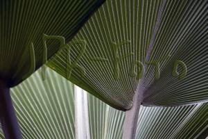 botanischer garten jena 17042011 (35)